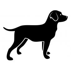 10037 - Alerte hond