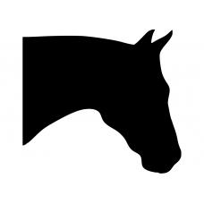 Paarden muursticker: 10102 - Paardenhoofd rechts