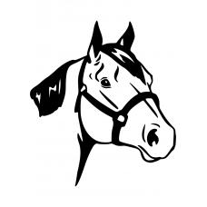 10263 - Paardenhoofd met halster